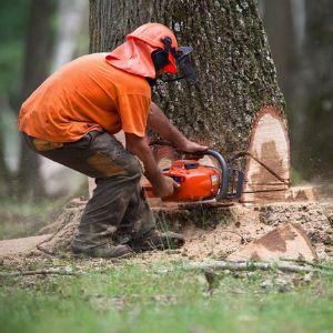 abattre un arbre avec une tronconneuse
